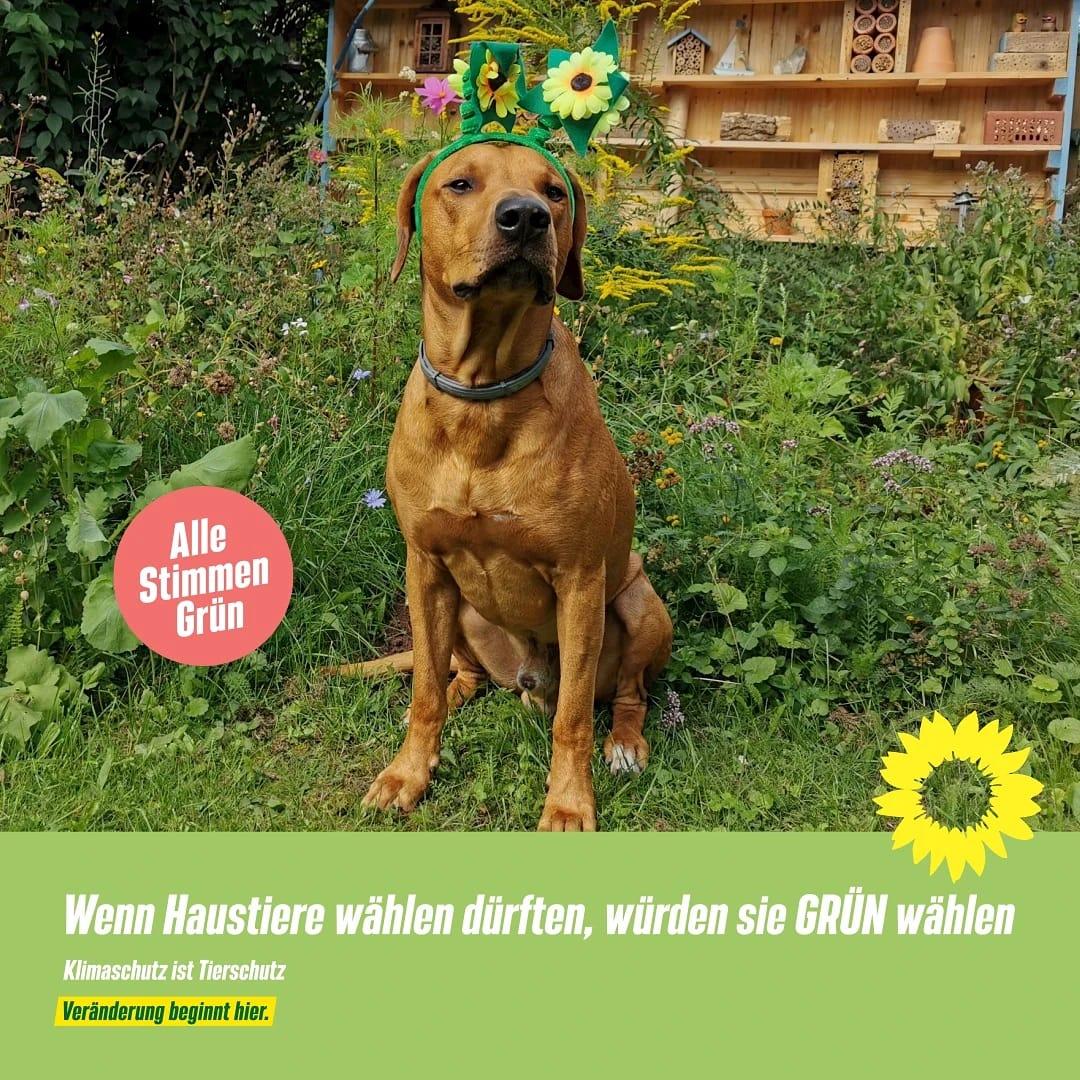 Klimaschutz ist Tierschutz